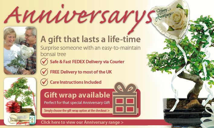 Anniversary Bonsai Gift