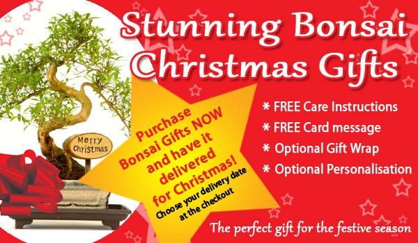 Christmas Bonsai Gifts