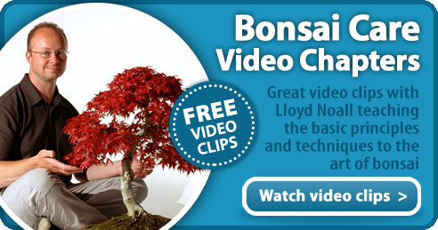 Bonsai Tree Care Videos