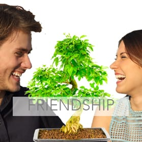 Bonsai trees meaning friendship