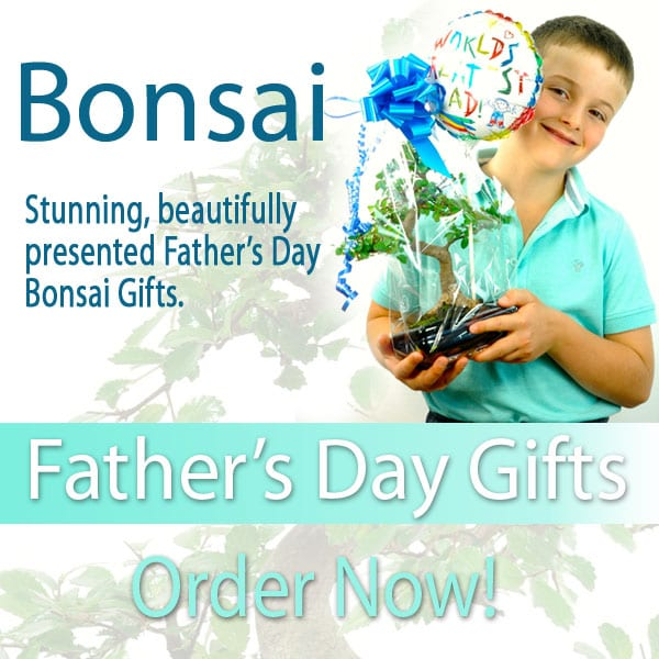 Father's Day Bonsai tree Gifts 2015