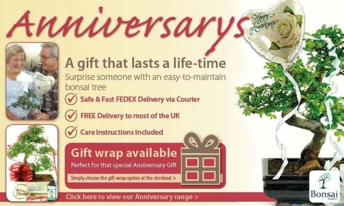 Beautiful Anniversary Bonsai Tree Gifts
