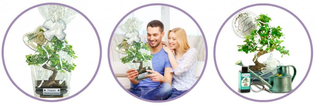 Anniversary bonsai gifts from bonsai direct