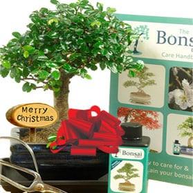 Baby Bonsai Christmas Kit