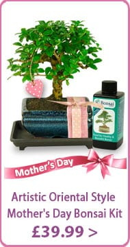 Orchard Style Mother's Day Gift