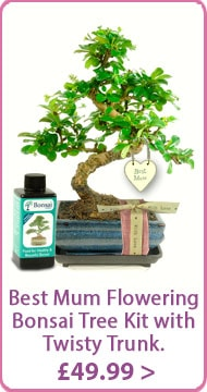 Mother's day Bonsai tree Gift