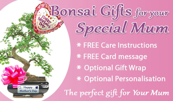 Mothers Day Bonsai Information