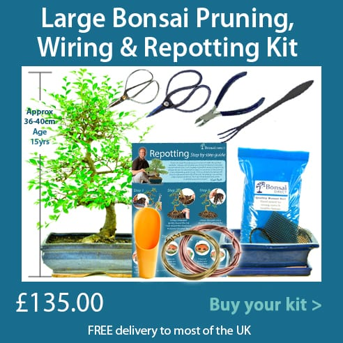 Hands on pruning, wiring and potting bonsai kits