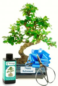 Happy Retirement Flowering Bonsai Kit