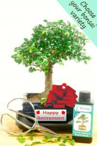 Complete Beginners Retirement Baby Bonsai Set