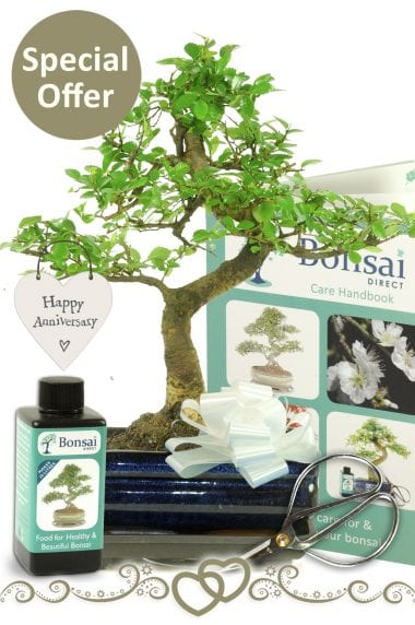 stunning s-shaped twisty bonsai gift for an anniversary present