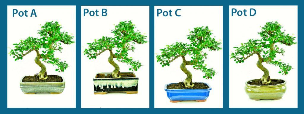 Choosing a bonsai pot