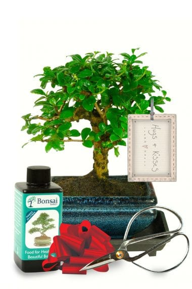 Flowering baby bonsai starter kit - hugs & kisses