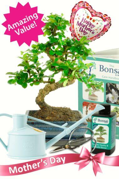 Supreme styled Mothers day bonsai starter kit