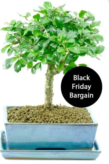 Striking Tea tree Black Friday Deal