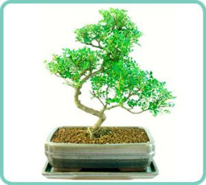 Example of paper tree indoor bonsai