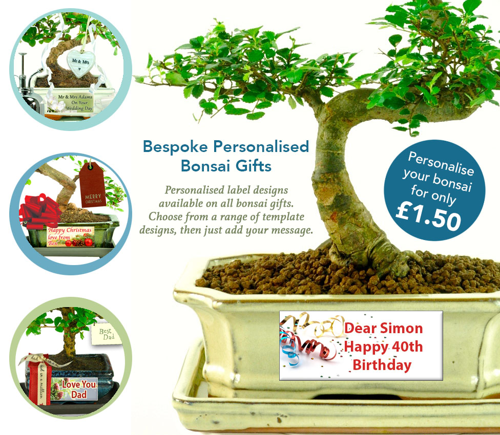 Personalise your bonsai tree gift