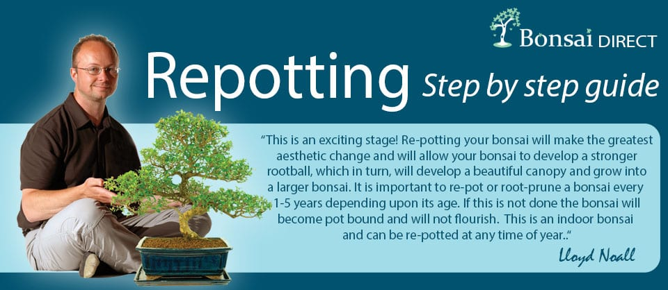 Bonsai Step by step potting guide