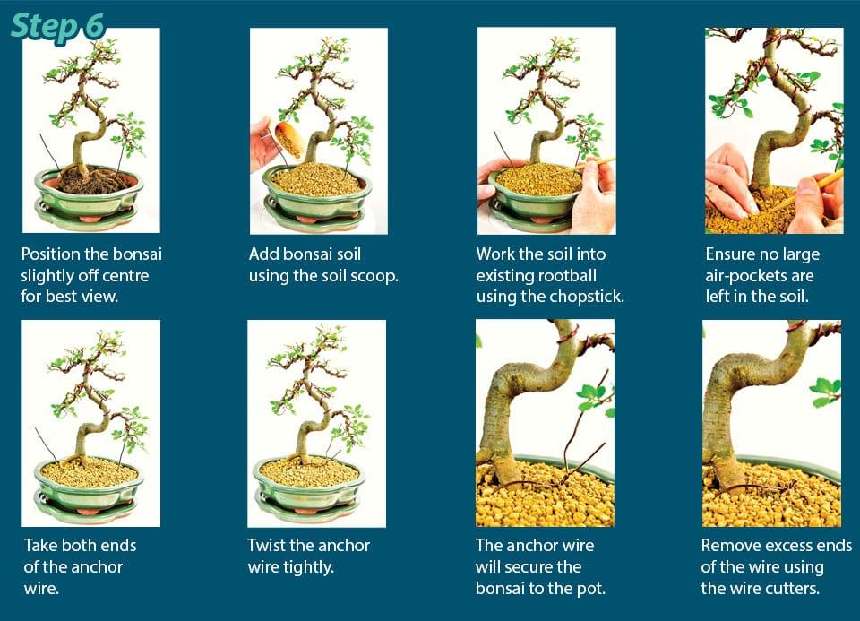 Bonsai Pottig Guide Step 6