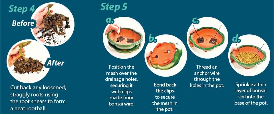 Bonsai Potting Guide Step 4 & 5