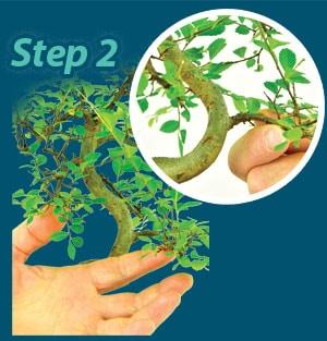 Pruning step 2