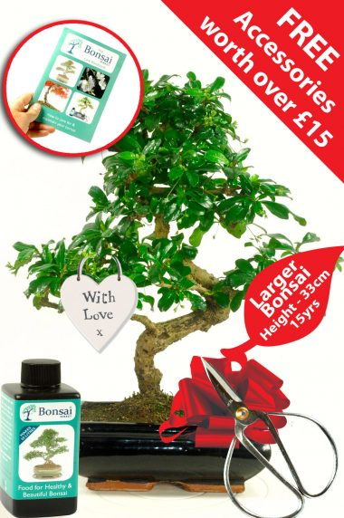 Romantic with love bonsai tree gift