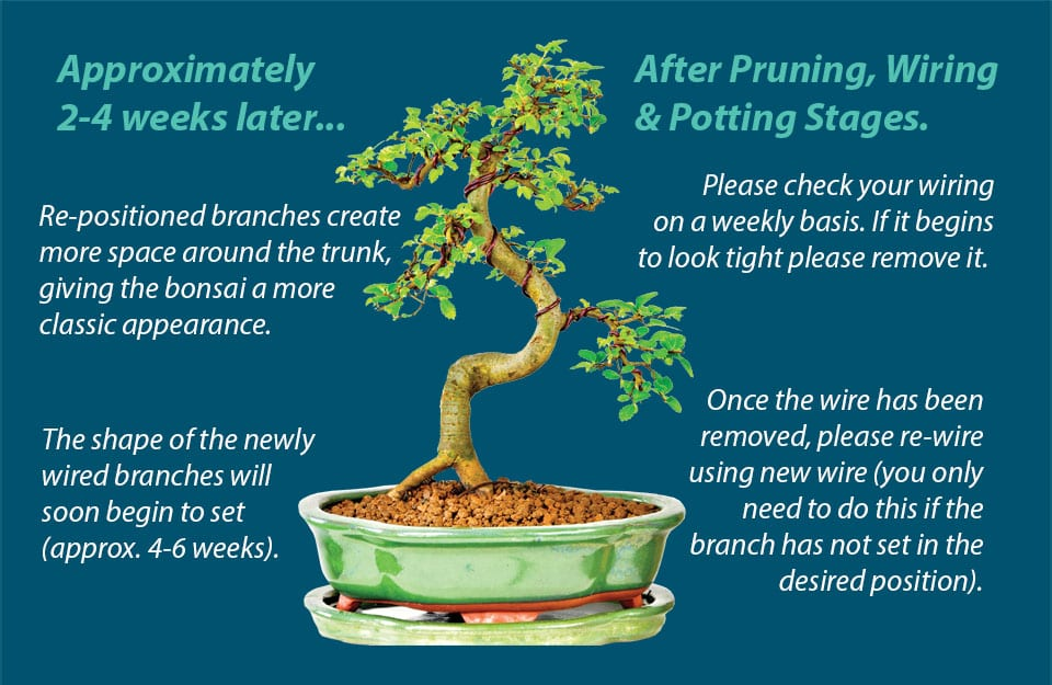 Wiring a bonsai - an overview