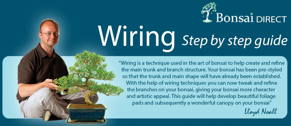 How to wire a bonsai tree guide