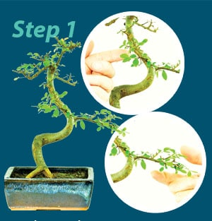 Bonsai Wiring Guide Step 1