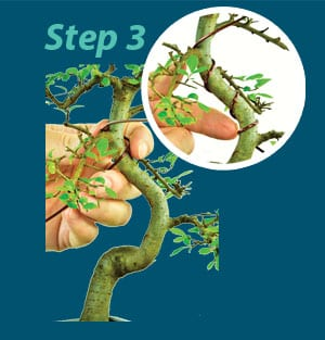 Bonsai Wiring guide - step 3