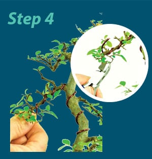 Bonsai Wiring Guide - Step 4
