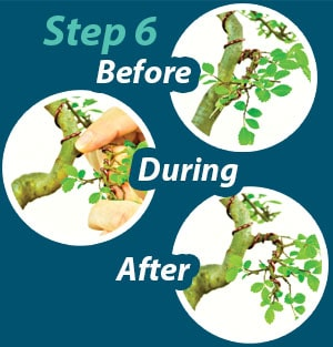 Bonsai Wiring Guide - Step 6
