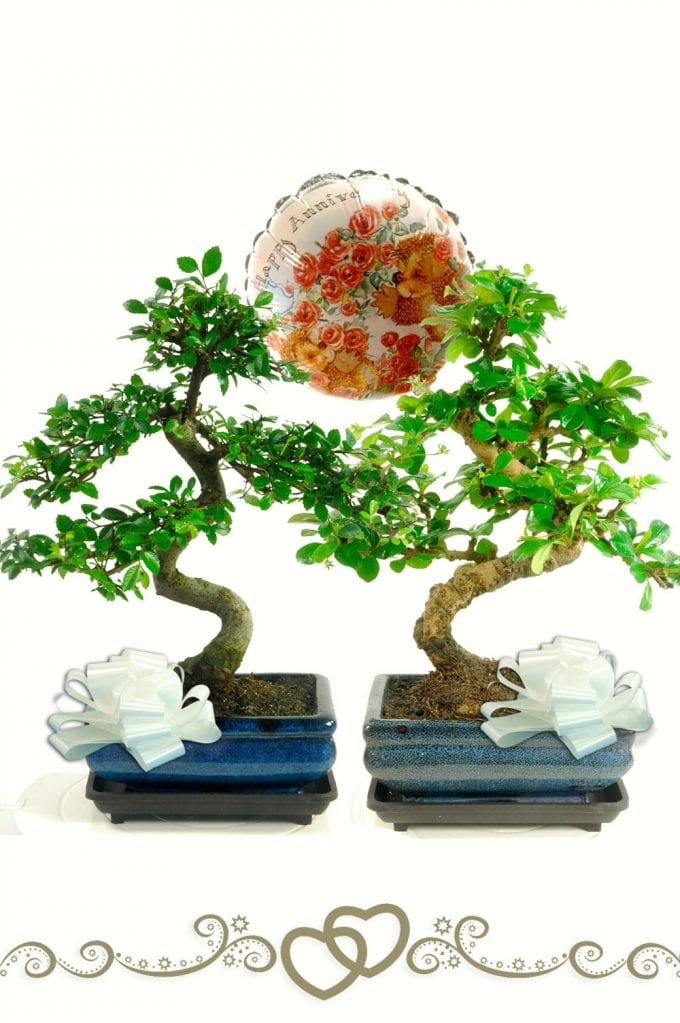 Perfect together - Happy Anniversary Bonsai gift