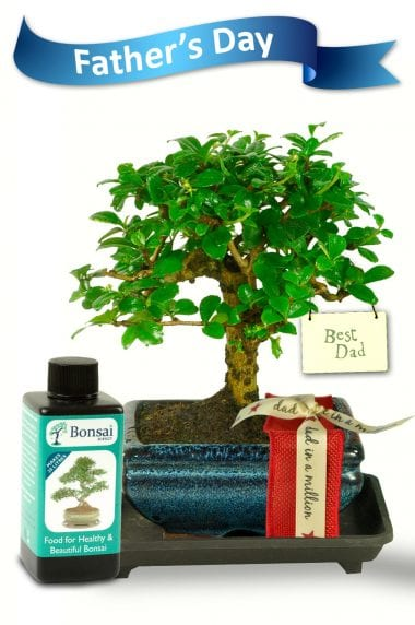 Artistic Oriental Style Fathers Day Bonsai Kit