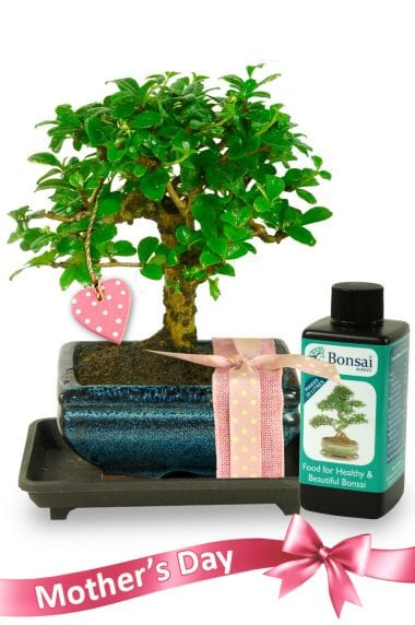 Artistic Oriental Style Mothers Day Bonsai Kit