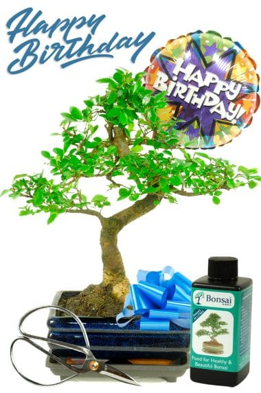 Balloon Blast Happy Birthday Bonsai Gift - For Him