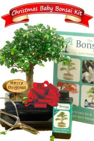 Beautiful Baby Christmas Bonsai Gift Set