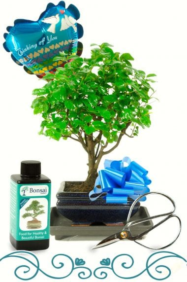 Beautiful Bonsai Gift to Convey Your Thoughts.