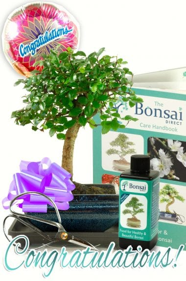 Beautiful Congratulations Bonsai Kit