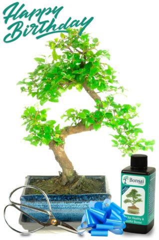 Beginners Bonsai Tree Kit (SAG8)