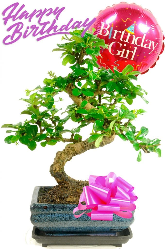 Birthday Girl Bonsai Gift