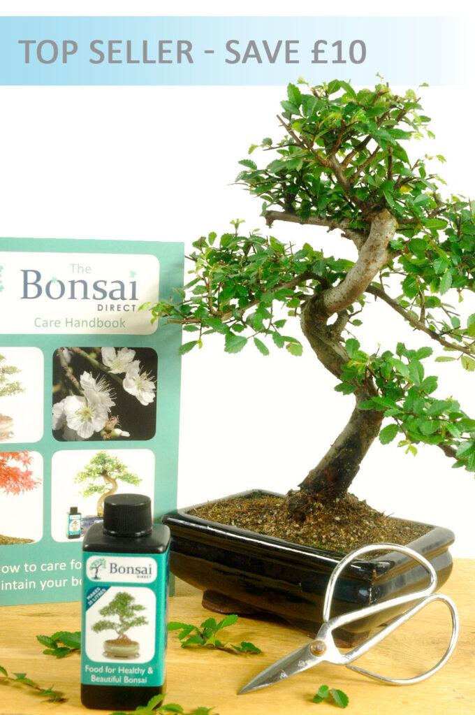 Chinese Elm Bonsai Starter Pack