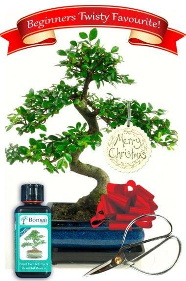 Christmas bonsai present
