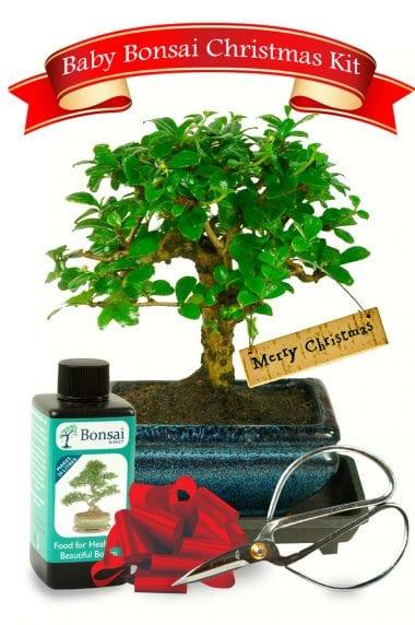 Beautiful Baby Bonsai Tree Unusual christmas gifts