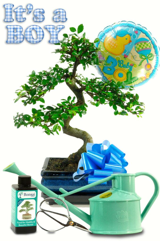 Complete Baby Boy Bonsai Gift