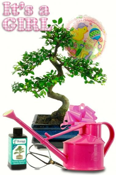 Complete Baby Girl Bonsai Gift