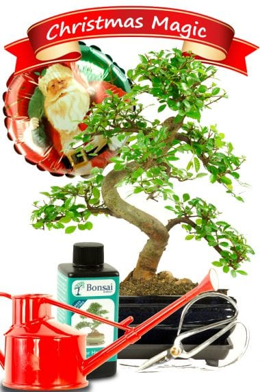 Complete Beginners Character Christmas Bonsai Kit