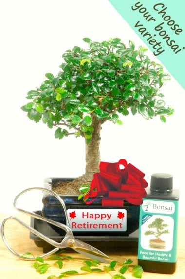 Complete Beginners Retirement Baby Bonsai Set