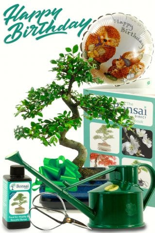 Complete Birthday Bonsai Kit including Watering Can