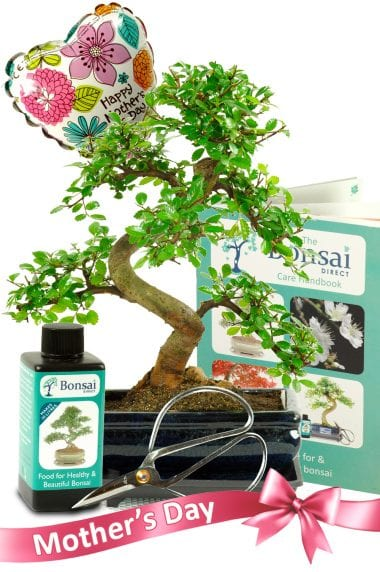 Complete Mothers Day Bonsai Set (MD4)